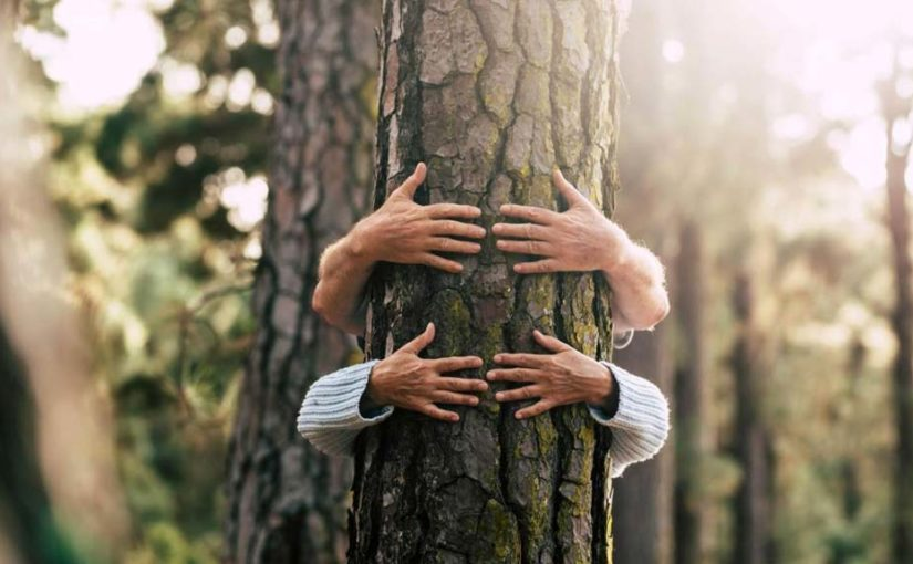Two people wrapping their arms and hugging a tree in a park