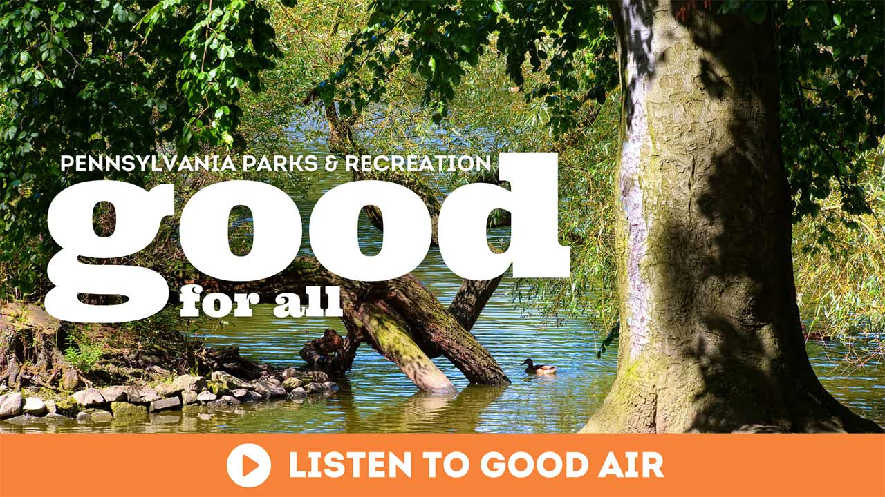 Good Air Podcast Good For All Duck floating on a pond in a tree-filled park