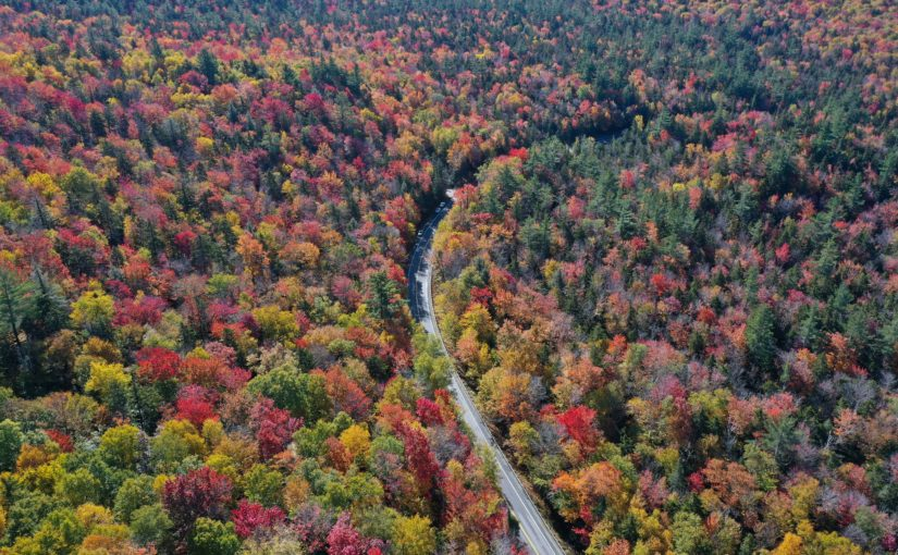 An aerial view of winding road through a forest thick with fall foliage.